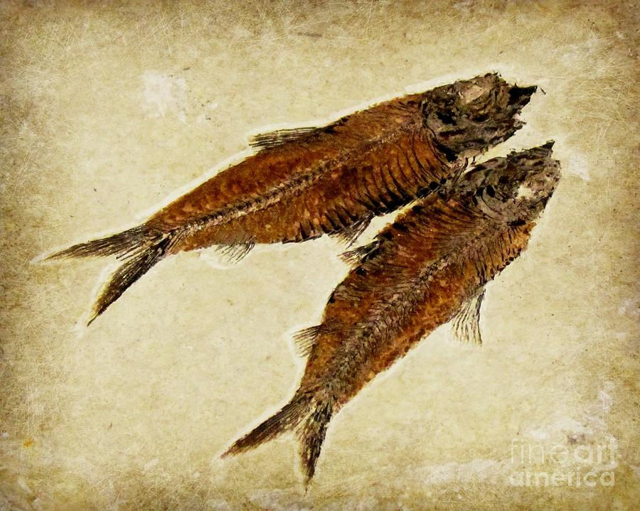 Fish Fossil Photograph