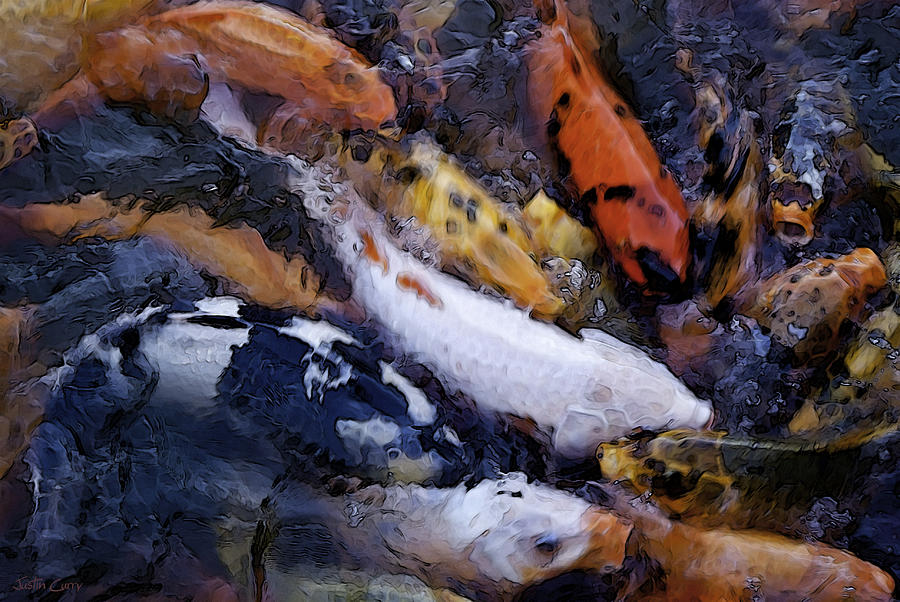 Fish Frenzy Photograph