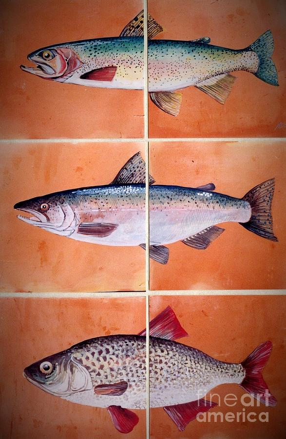 Fish Mural On Terracotta Tiles Ceramic Art  - Fish Mural On Terracotta Tiles Fine Art Print