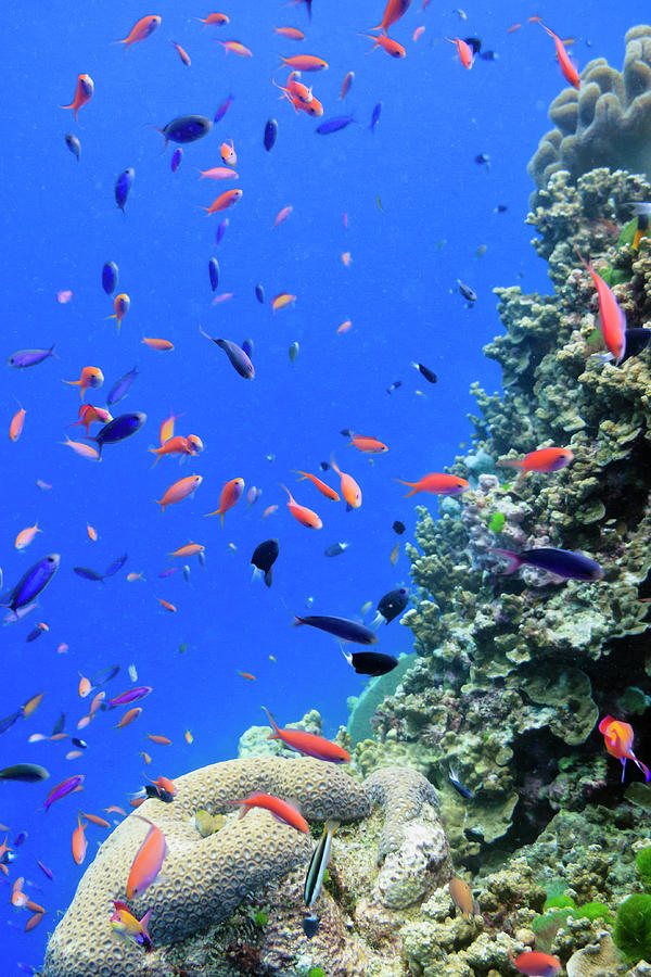 Fish On Tropical Coral Reef Photograph  - Fish On Tropical Coral Reef Fine Art Print