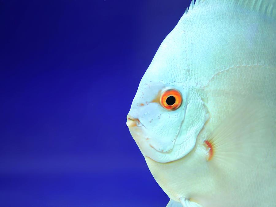 Fish Photograph