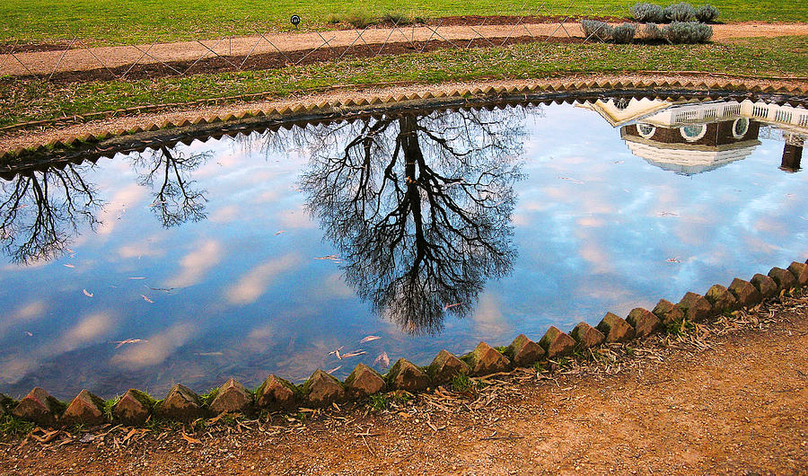 Fish Pond II Photograph  - Fish Pond II Fine Art Print