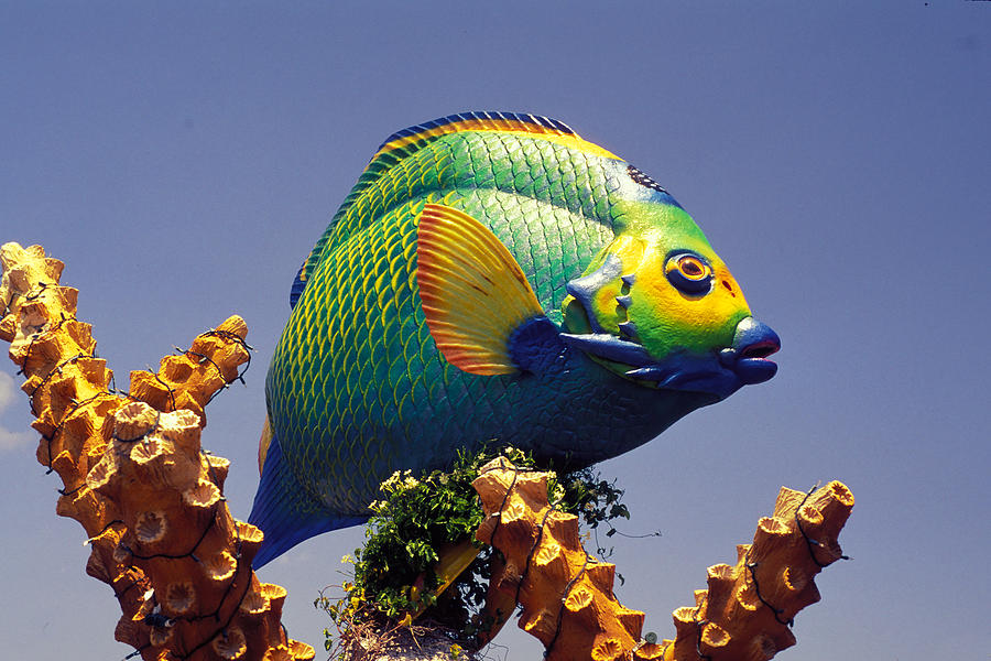 Fish sculpture in florida keys photograph by carl purcell for Florida tropical fish