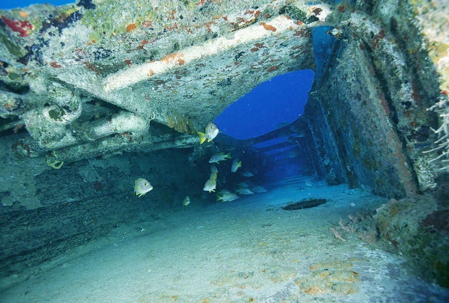 Fish Swimming In Shipwreck, Tortola Photograph
