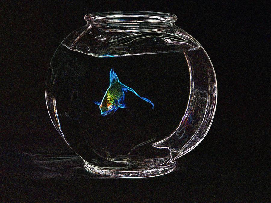 Fishbowl Photograph