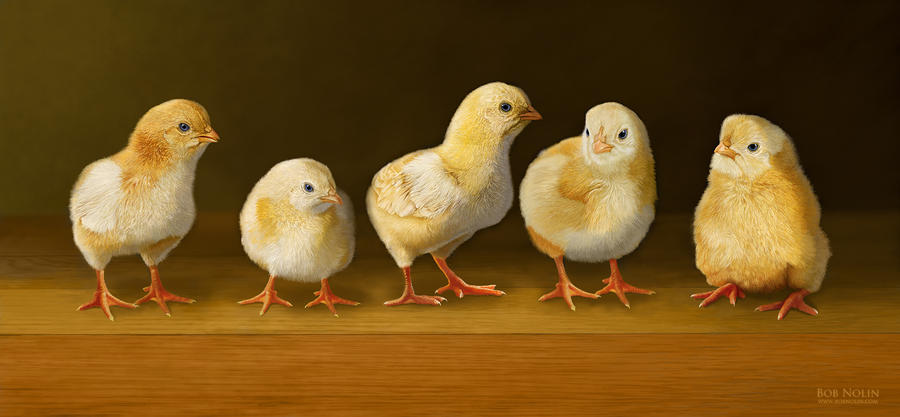 Five Chicks Named Moe Digital Art  - Five Chicks Named Moe Fine Art Print