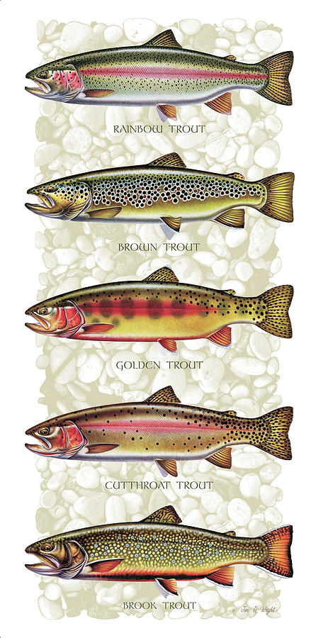 Five Trout Panel Painting  - Five Trout Panel Fine Art Print