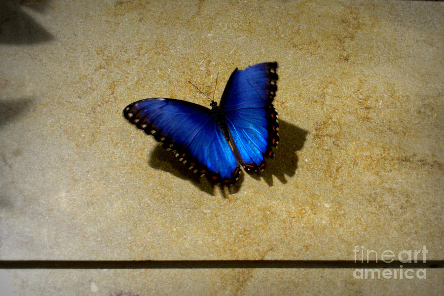 Flawed Beauti-fly Photograph