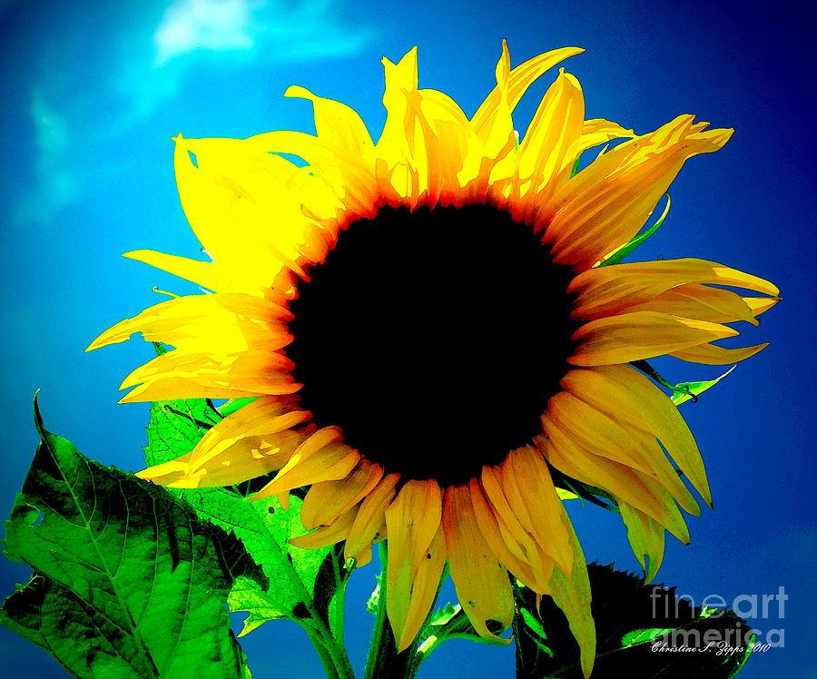Fleur Du Soleil II Photograph