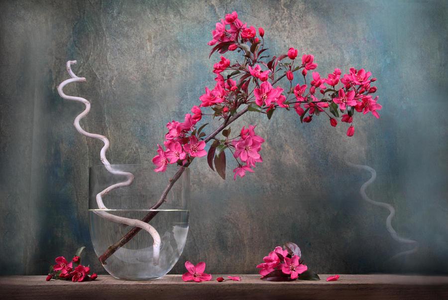 Fleur Photograph