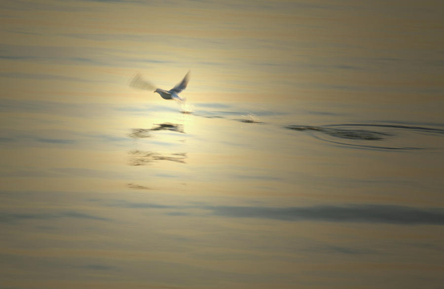 Flight At Dusk Photograph