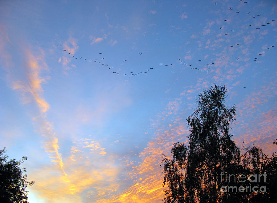 Sky Photograph - Flight Into The Sunset by Ausra Huntington nee Paulauskaite