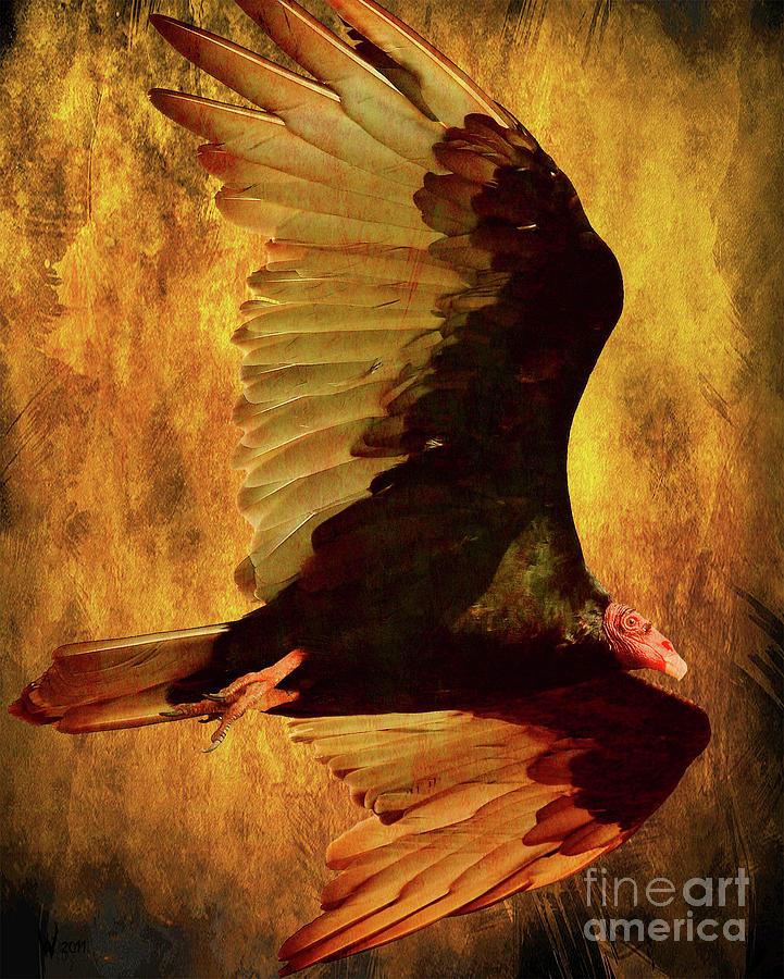 Flight Of A Vulture . Texture . 40d8879 Photograph
