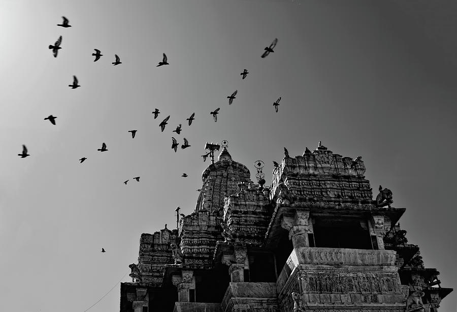 Flight Of Birds Above Jadgish Temple Photograph  - Flight Of Birds Above Jadgish Temple Fine Art Print