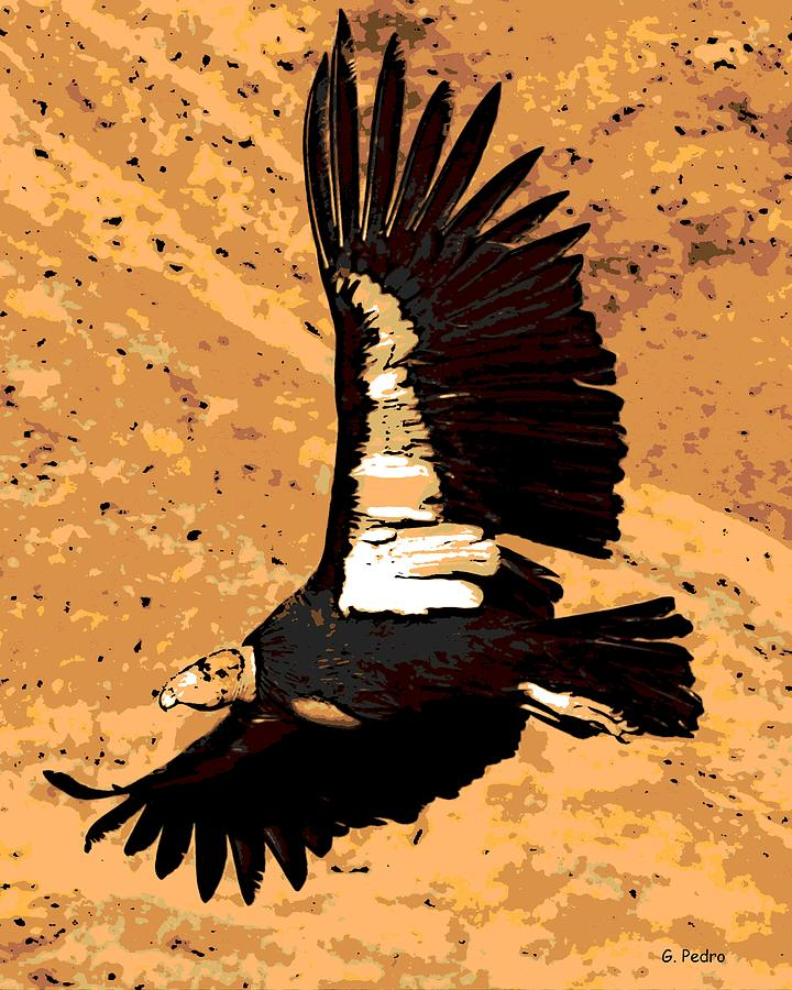 Flight Of The Condor Photograph  - Flight Of The Condor Fine Art Print