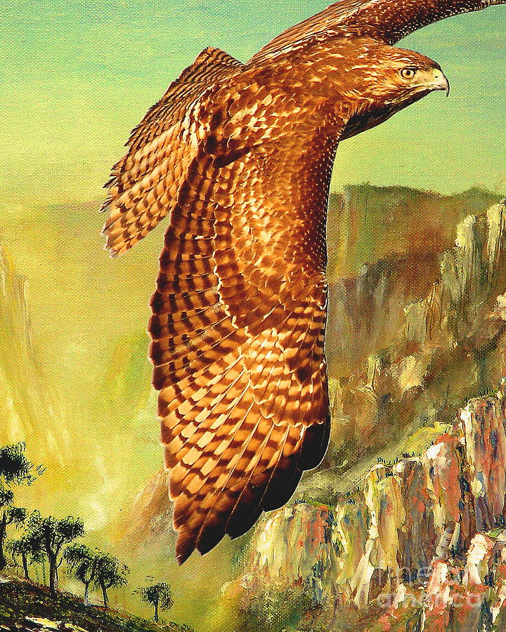 Flight Of The Red Tailed Hawk Digital Art  - Flight Of The Red Tailed Hawk Fine Art Print