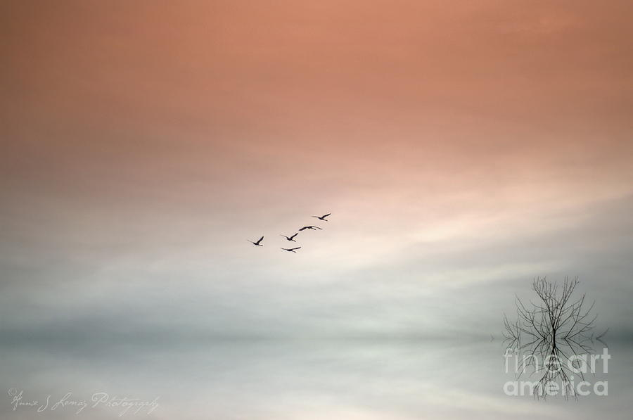 Flight Of The Swans Photograph