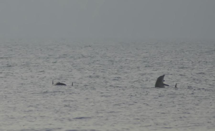 Flipper Photograph