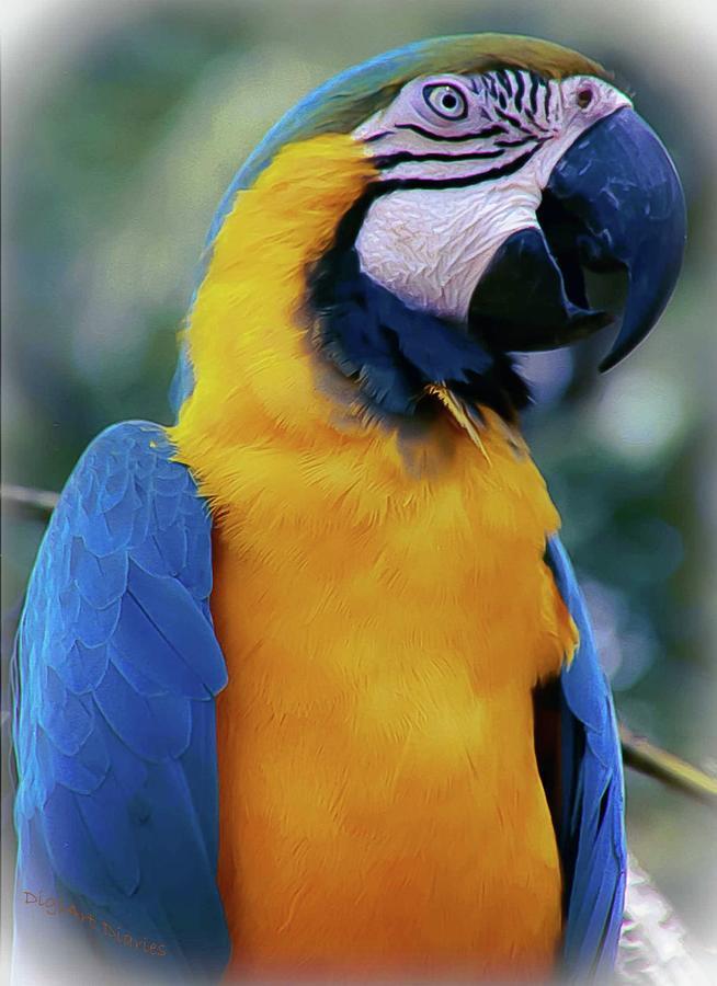 Flirtacious Macaw Photograph