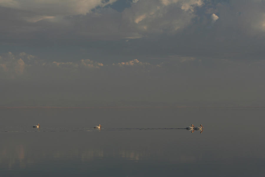 Salton Sea Photograph - Floating Along by Laurie Search