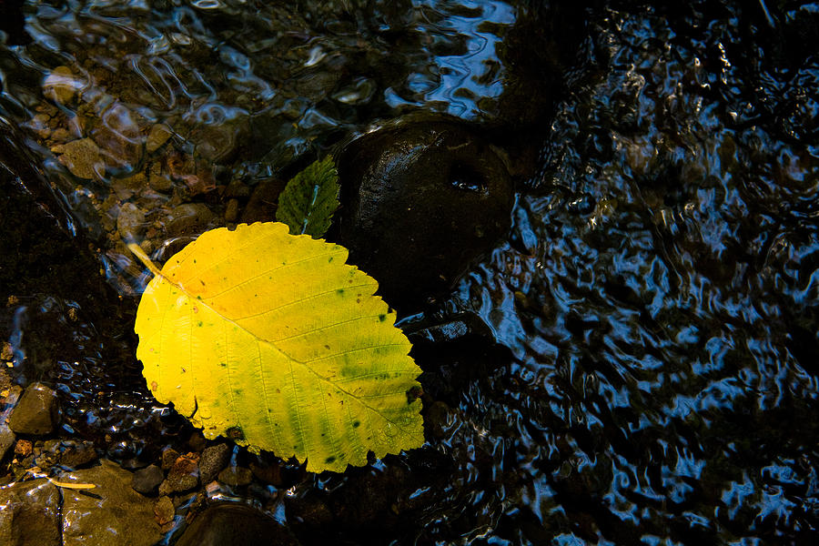 Leaf Photograph - Floating Down The River by Sheri Van Wert