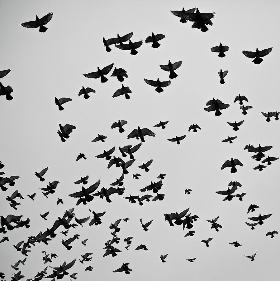 Flock Of Flying Pigeons Photograph