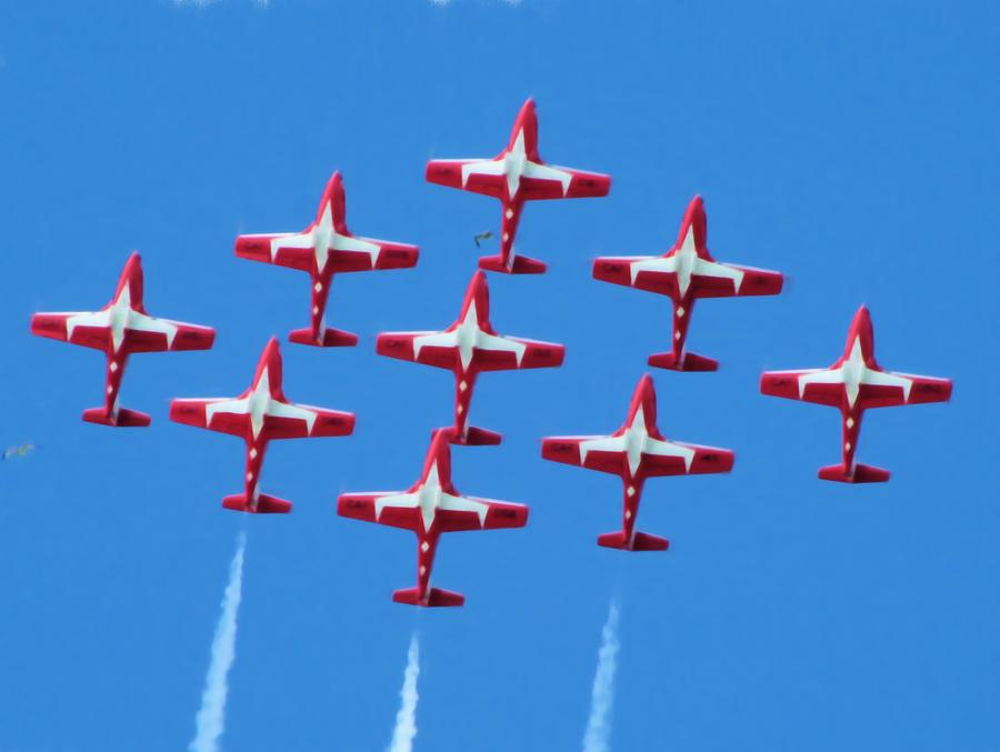 Flock Of Snowbirds Photograph  - Flock Of Snowbirds Fine Art Print
