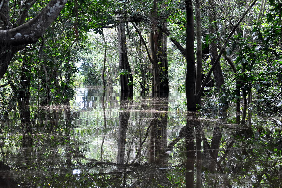 Flooded Amazon Rainforest Photograph  - Flooded Amazon Rainforest Fine Art Print