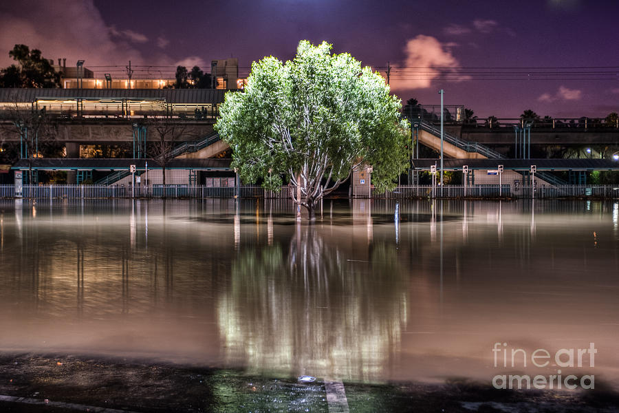 Flooded Tree Photograph  - Flooded Tree Fine Art Print