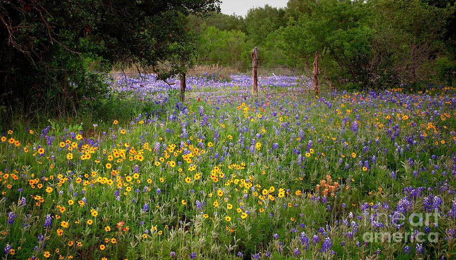 Floral Pasture No. 2 Photograph