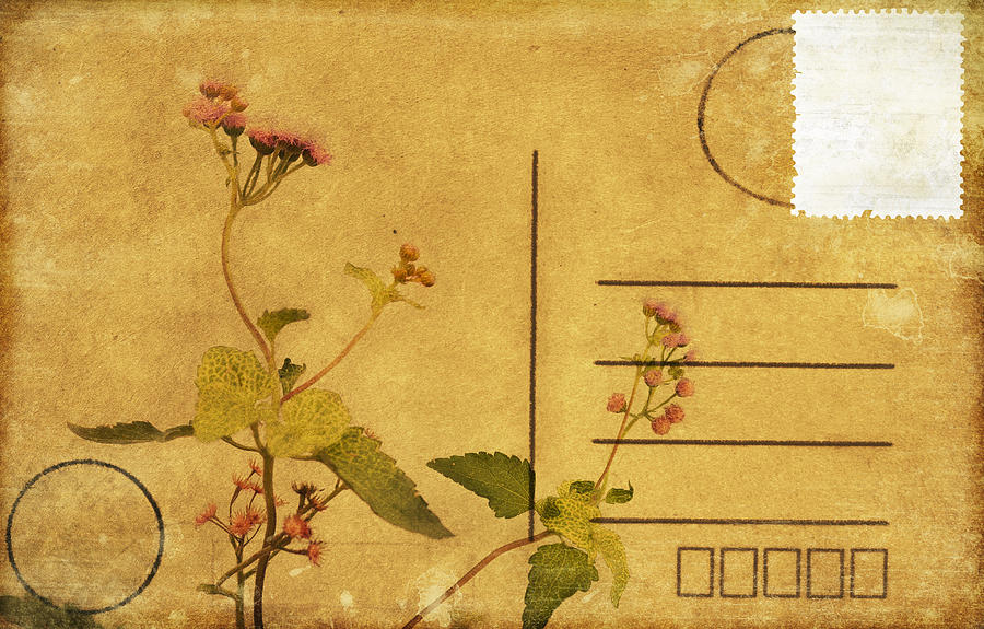 Floral Pattern On Postcard Photograph
