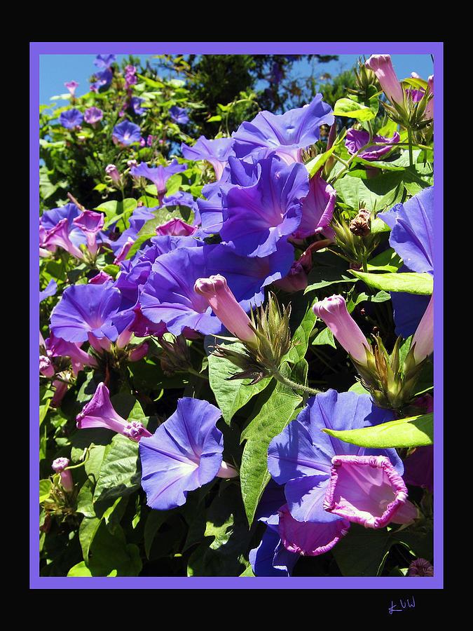 Floral Tango Photograph