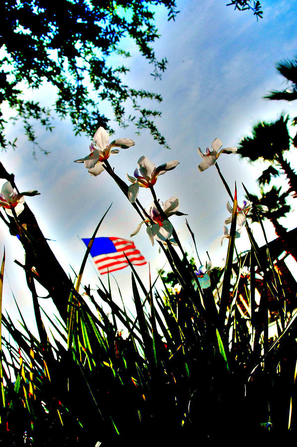 Florida Flag Photograph