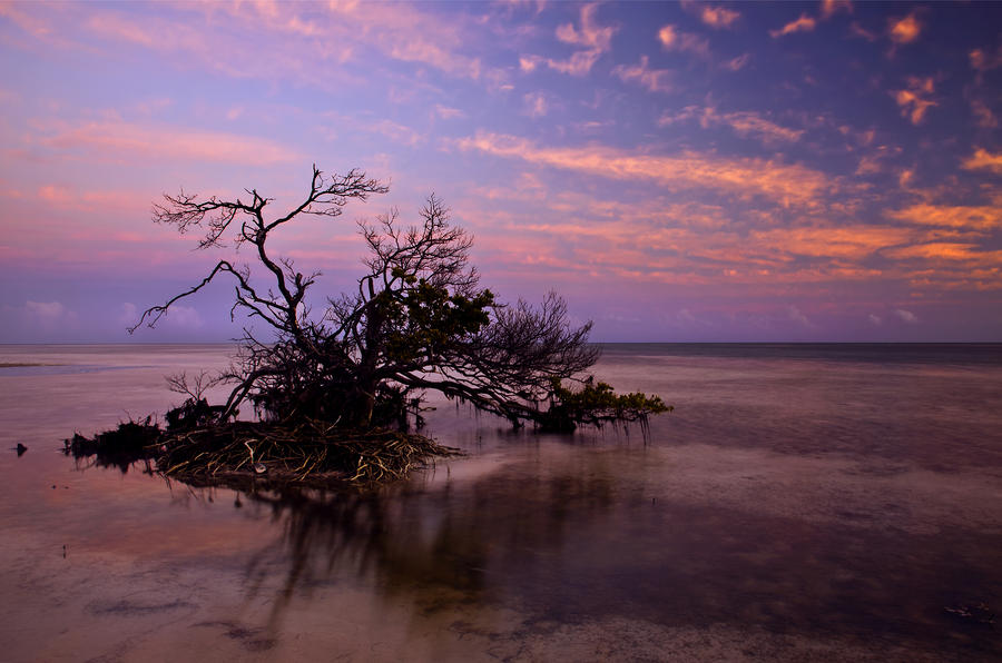 Florida Mangrove Sunset Photograph  - Florida Mangrove Sunset Fine Art Print