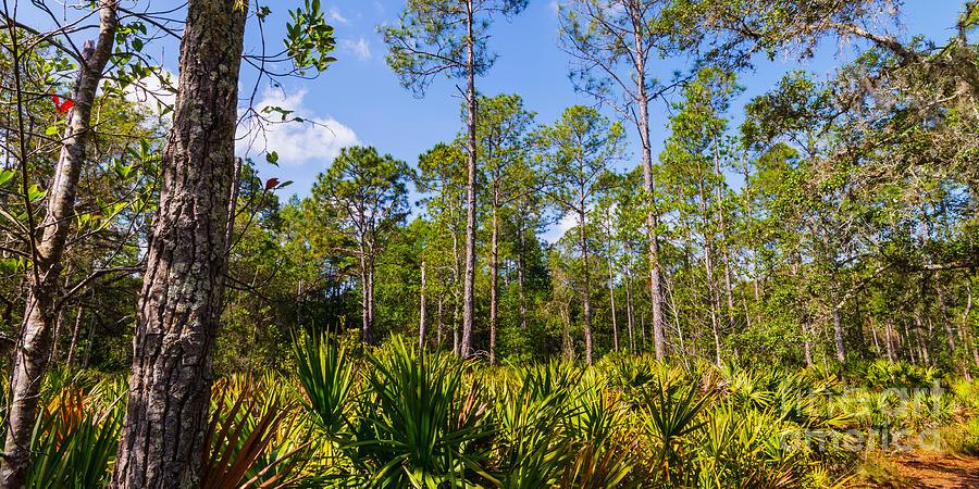 'booker Creek' Photograph - Florida Scrub 7 by Carson Wilcox