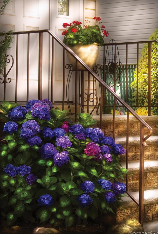 Flower - Hydrangea - Hydrangea And Geraniums  Photograph