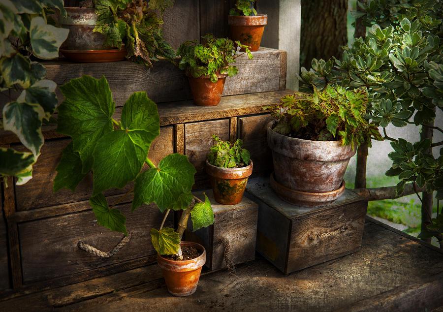 Flower - Plant - A Summers Soak  Photograph