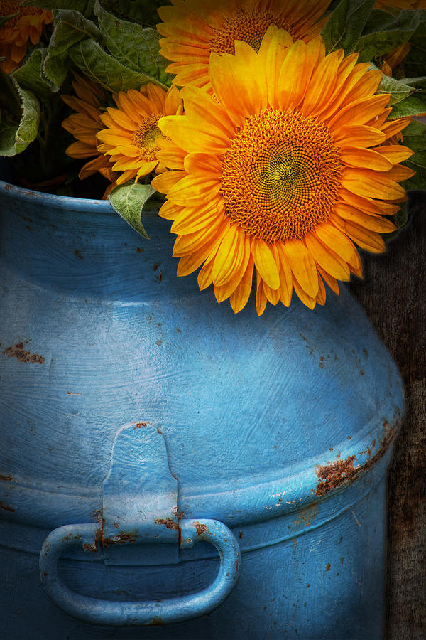 Flower - Sunflower - Little Blue Sunshine  Photograph  - Flower - Sunflower - Little Blue Sunshine  Fine Art Print