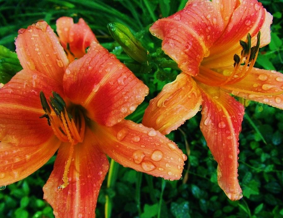Flower-14 Photograph