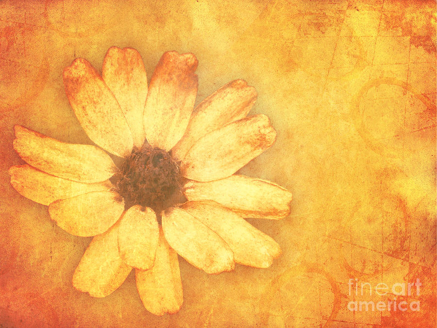 Flower Art Mixed Media  - Flower Art Fine Art Print