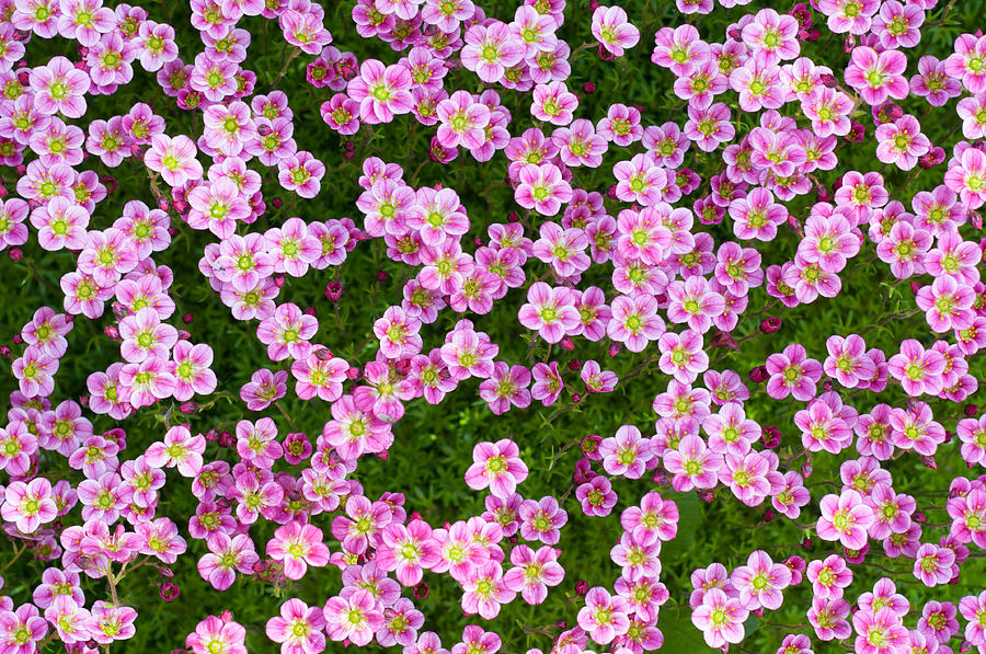 Flower Background is a photograph by Konstantin Gushcha which was ...
