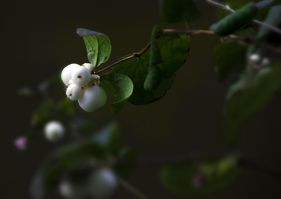 Flower Balls Photograph