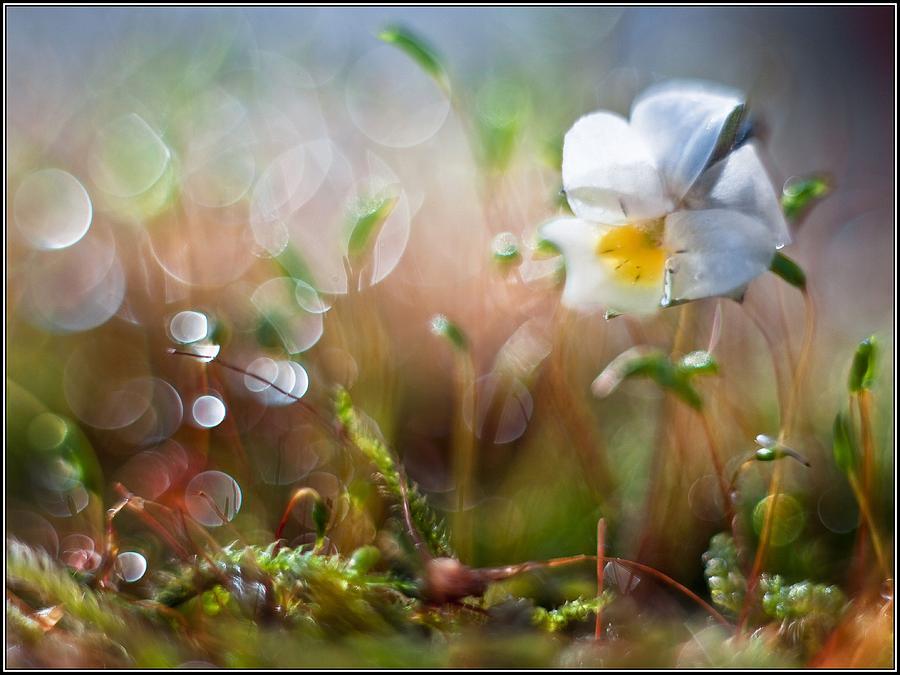 Flower Bell Photograph