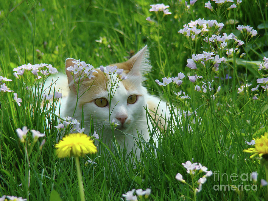 Flower Cat Photograph