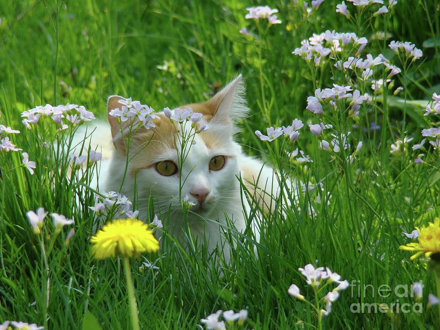 Photograph Photograph - Flower Cat by Bruno Santoro