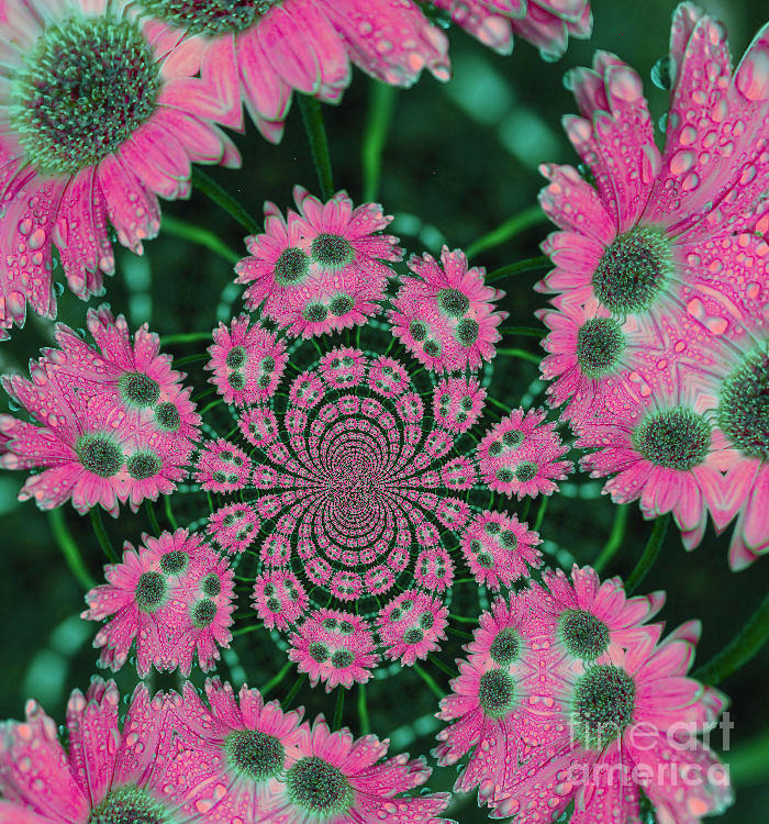Flower Design Photograph  - Flower Design Fine Art Print