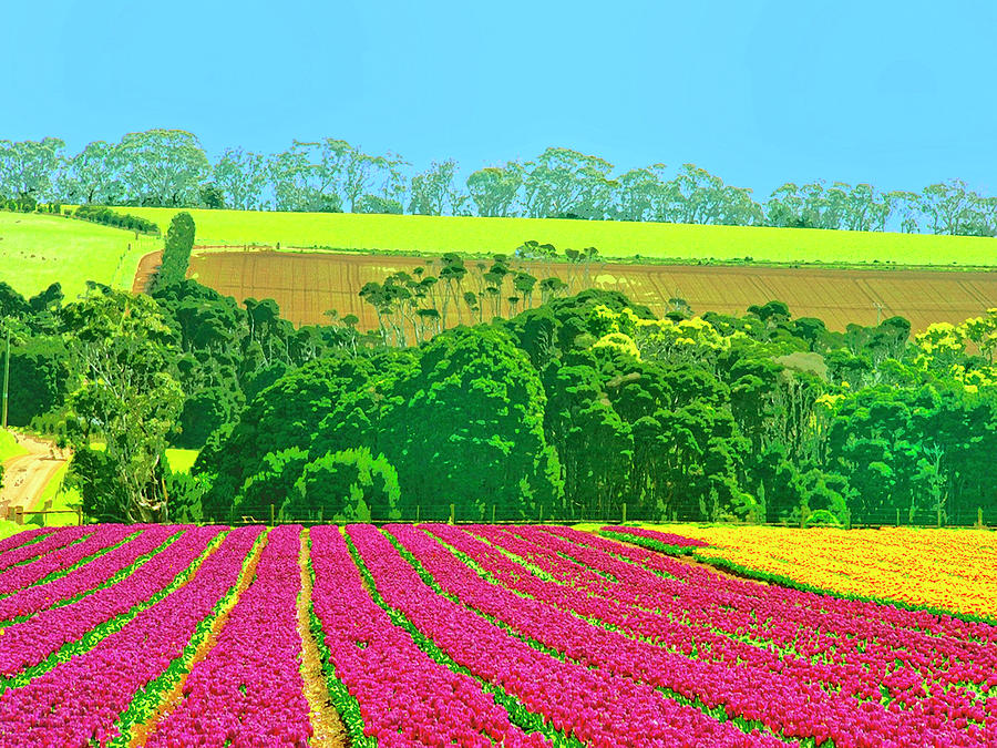 Flower Farm And Hills Mixed Media  - Flower Farm And Hills Fine Art Print