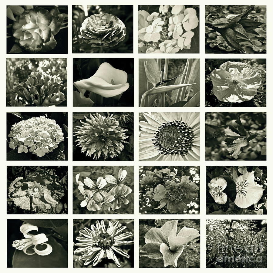 Flower Favorites Bw Photograph