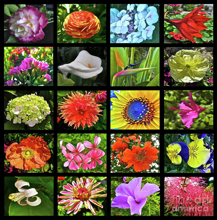 Flower Favorites Photograph  - Flower Favorites Fine Art Print