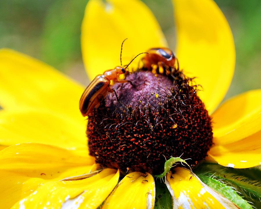 Flower Friends Photograph